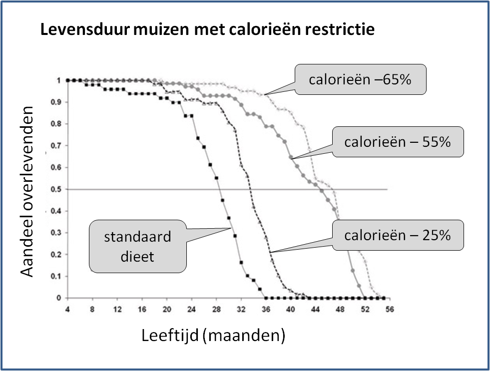levensduur-muizen-calorieen-restrictie2