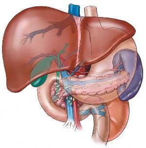 Lever en levercirrose
