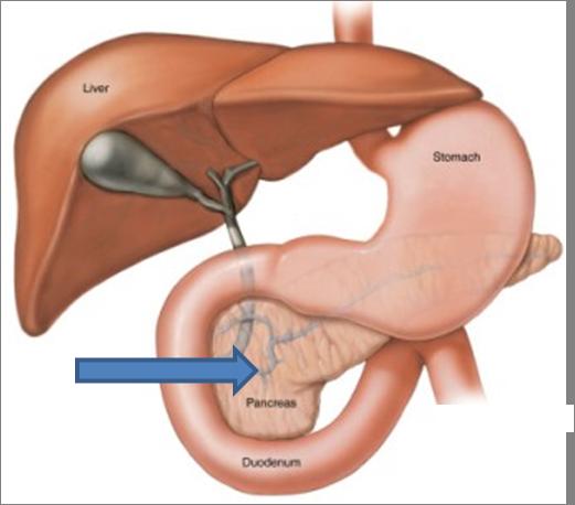 Pancreas of alvleesklier